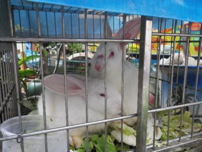 籠のウサギ