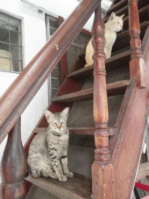 お隣の男の子と猫