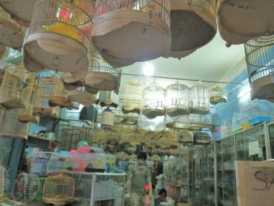 鳥かご屋、ベトナム