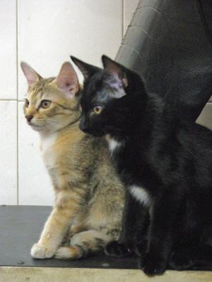 サイゴンの猫