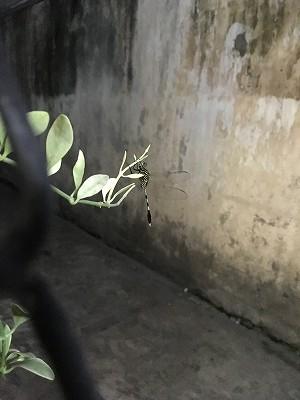 ベトナムの観葉植物とトンボ