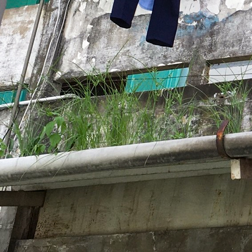 サイゴンの雨どい