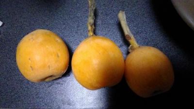 館山収穫物 枇杷