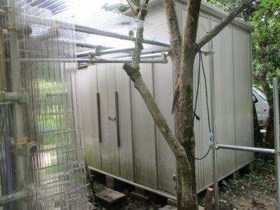 シナダッシュ小屋 改修