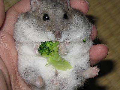 画像 : お腹ポンポン! 〜 お腹...