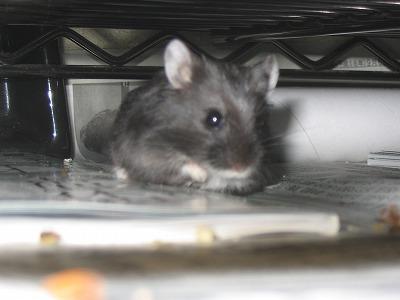 ネズミ○イ○イになんか、ひっかかるもんかい!