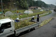 竹が山積みのトラック