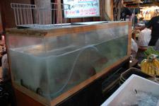 水槽の中には魚がいっぱい♪♪