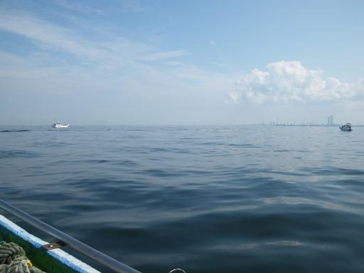 ナギの富津沖