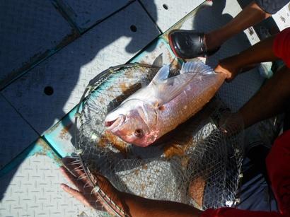 5.5キロ大鯛