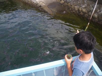 鯛のイケス