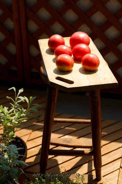 トマトの日光浴