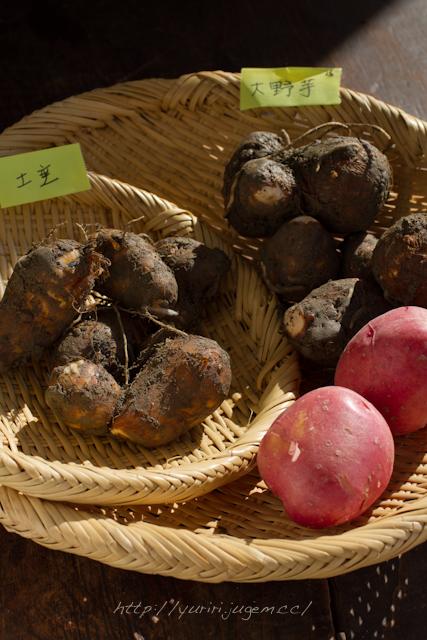 20111213 チャーミーさんちの野菜たち-14.jpg