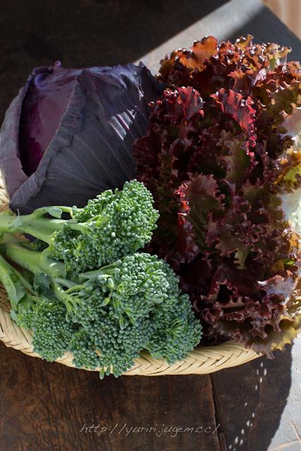 20111213 チャーミーさんちの野菜たち-12.jpg