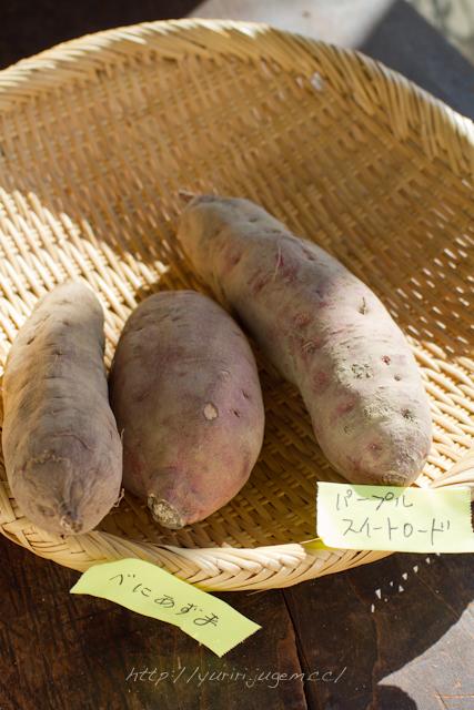 20111213 チャーミーさんちの野菜たち-11.jpg