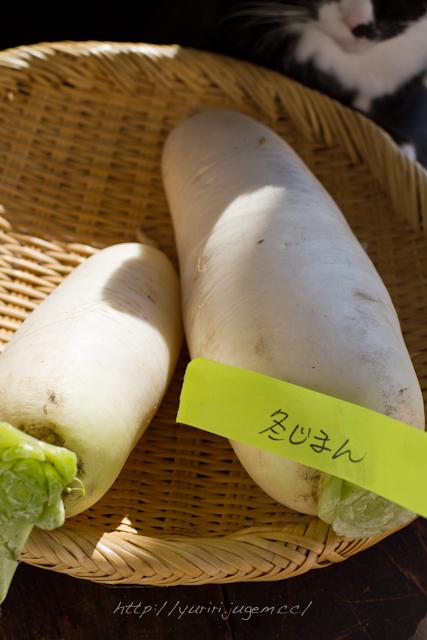 20111213 チャーミーさんちの野菜たち-8.jpg