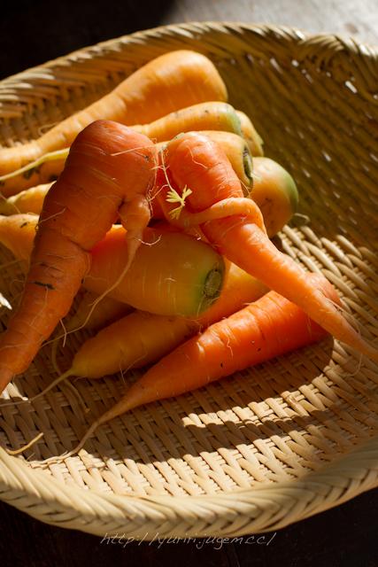 20111213 チャーミーさんちの野菜たち-7.jpg