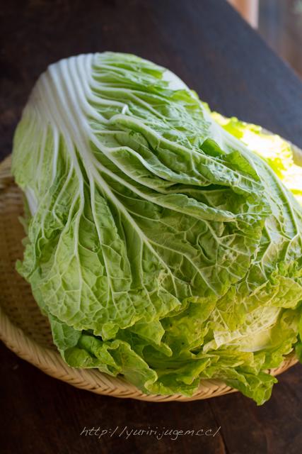 20111213 チャーミーさんちの野菜たち-5.jpg