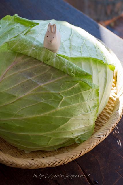 20111213 チャーミーさんちの野菜たち-4.jpg