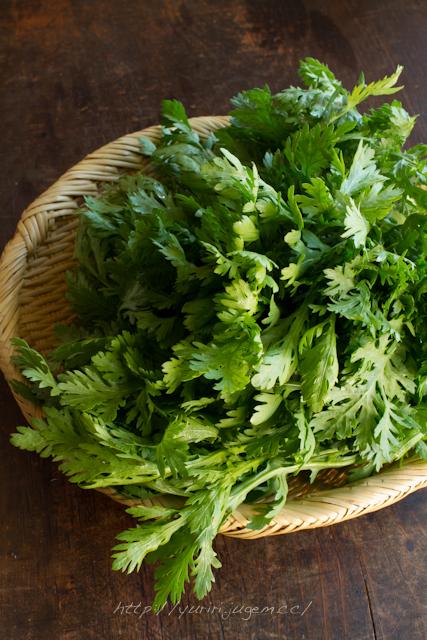 20111213 チャーミーさんちの野菜たち-2.jpg