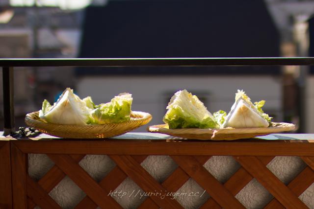 20111213 白菜.jpg