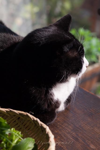 20120328 ベランダ菜園とけん.jpg