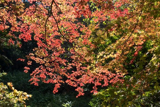 20141106紅葉-4.jpg