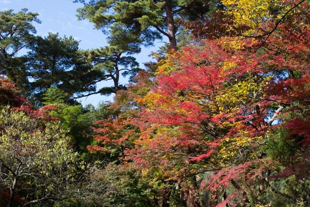 20141106紅葉-3.jpg