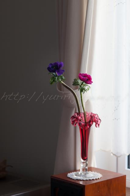 20150320花.jpg