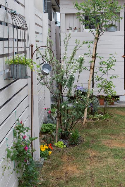 20150519雨の庭-19.jpg