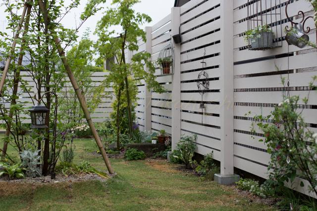 20150519雨の庭-13.jpg