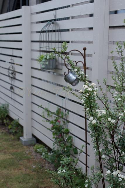 20150519雨の庭-12.jpg