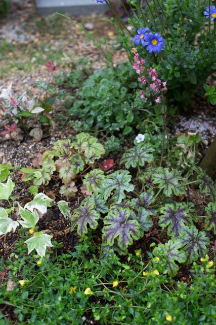 20150519雨の庭-10.jpg