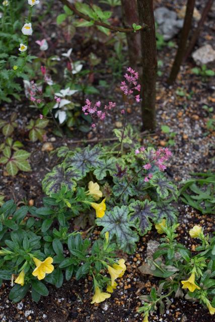 20150519雨の庭-6.jpg
