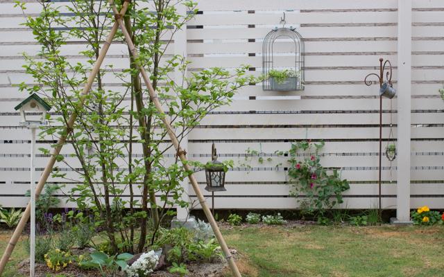 20150519雨の庭-2.jpg