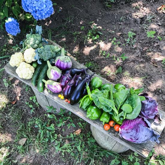 20170711畑の収穫野菜-2.jpg