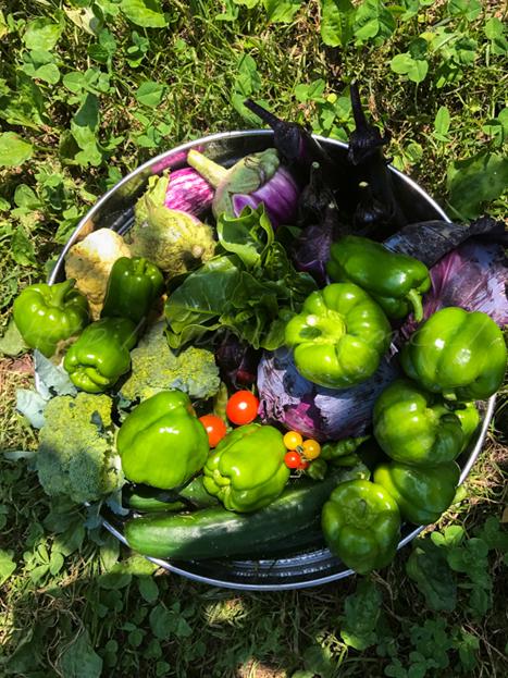20170711畑の収穫野菜-3.jpg