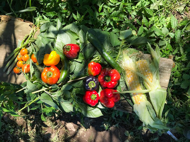20170901収穫物.jpg