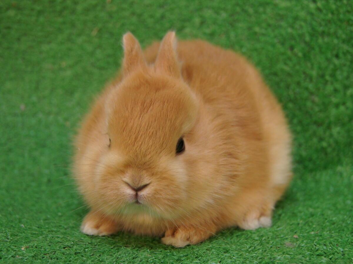 ウサギの画像 p1_24