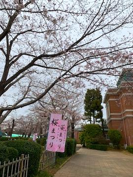 牛久シャトー桜祭り