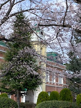 牛久シャトーの桜