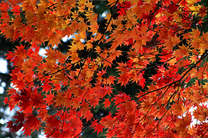 恵林寺の紅葉