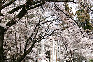 春の恵林寺・信玄公宝物館
