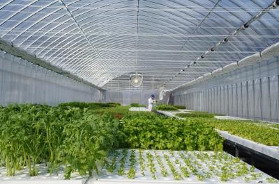 水耕栽培の温室