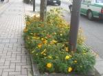 花街道チラシ1