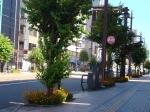 市電通り(新富)20120821(1)