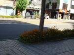 市電通り(新富)20120821(4)