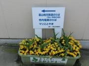 富山駅前201304(3)