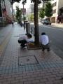 ひまわり通り2013.6.5(8).JPG