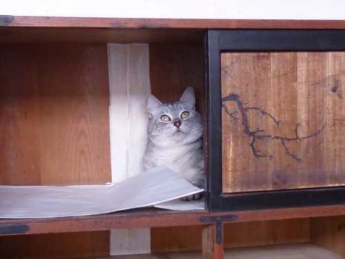 たんす猫見上げ.JPG